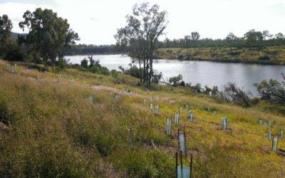 Funding to Help Threatened Species in the Burnett