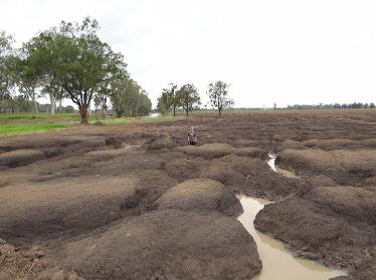 THREEMOON FLOODPLAIN RESTORATION