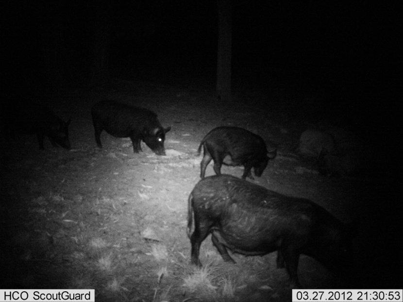 Co-ordinated Feral Pig Control