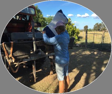 Introducing legumes to improve pasture – Mundubbera